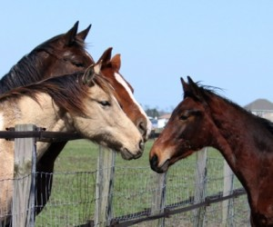 horsegroup